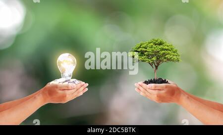 Deux mains humaines tenant des petits arbres et une lampe à économie d'énergie sur fond vert flou avec le concept de conservation d'énergie et l'environnement de la terre