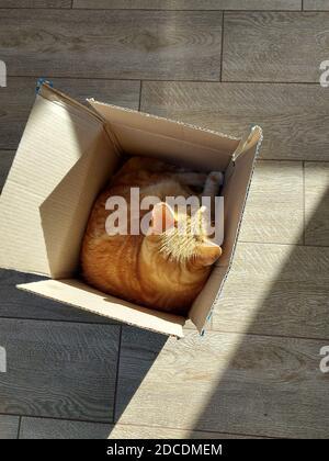 Un chat de gingembre est assis dans une boîte sur un parquet.