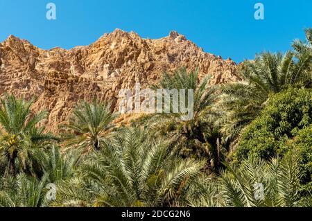 Paysage de l'oasis de Wadi Tiwi avec des montagnes et des palmiers à Sultanat d'Oman.