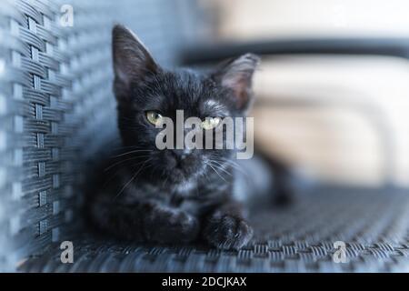 chat noir avec les yeux jaunes assis sur une chaise, regarde la caméra. gros plan