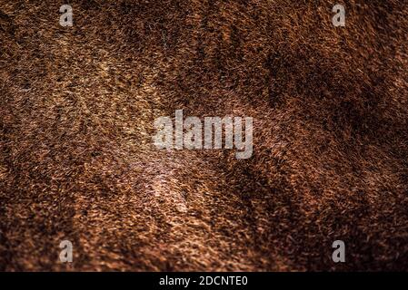 Fourrure brune courte naturelle. Texture brune du côté marin de la couche de peau de mouton Banque D'Images