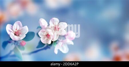 Fleurir l'arbre sur le fond de la nature. Fleurs de printemps. Bruit de fond du ressort. Concept flou.