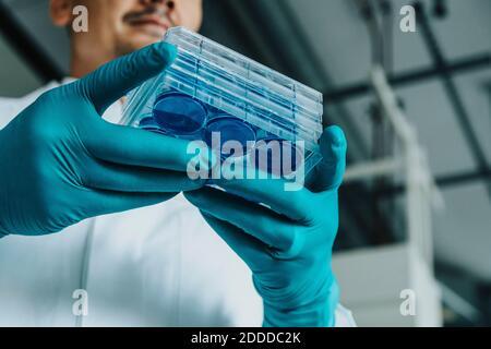 Scientifique tenant le plateau de boîtes de Pétri en se tenant au laboratoire