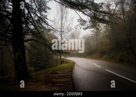Paysage brumeux d'automne avec des arbres couvrant une route asphaltée et des feuilles sur le sol, par une journée brumeuse