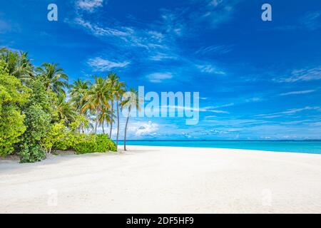 Superbe plage naturelle avec palmiers et ciel nuageux. Vacances d'été voyage vacances concept de fond. Maldives plage paradisiaque. Voyage de luxe en été Banque D'Images