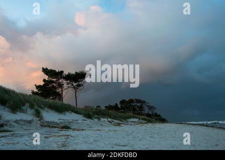Allemagne, Mecklembourg-Poméranie occidentale, Prerow, lever du soleil sur la plage ouest, Mer Baltique