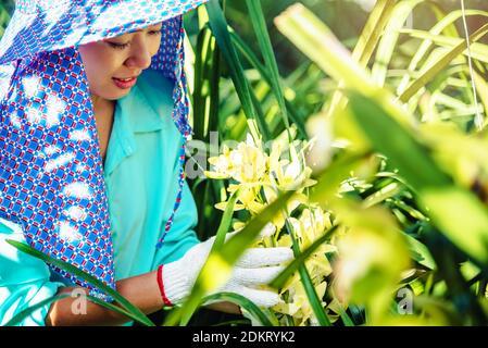 Chercheuse féminine examinant les plantes en serre