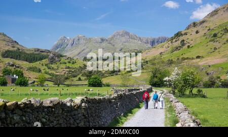 Little Langdale, Cumbria, Angleterre. Trois randonneurs marchant vers les Langdale Pikes le long de la voie entre les murs de pierre sèche typiques.