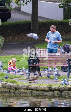 Un père et sa petite fille nourrissant des pigeons dans les jardins de Trenance à Newquay, en Cornouailles.