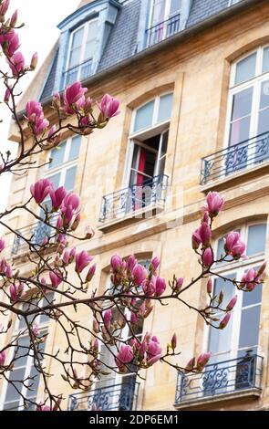 Printemps à Paris. Le magnolia fleuri et un bâtiment typiquement parisien avec un mansarde en arrière-plan. Concept de vacances romantiques.