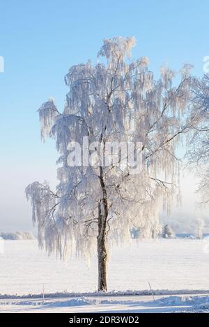 Arbre d'hiver solitaire sur le terrain
