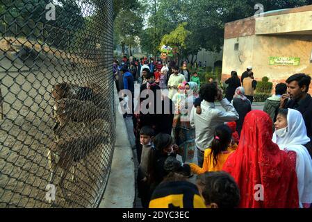 Pakistanais un grand nombre de Christen profitent à Lahore Zoo après les prières de Noël pendant les célébrations de Noël à Lahore