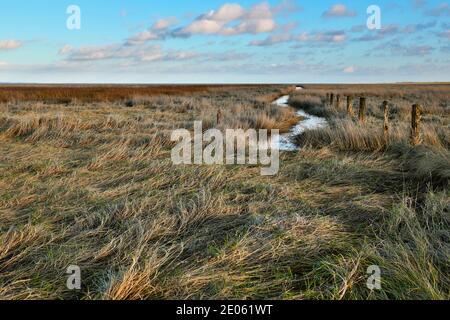 Un marais salé dans la Basse-Saxe de la mer de Wadden, Allemagne. Les clôtures et le fossé sont caractéristiques des marais salants de la mer du Nord.