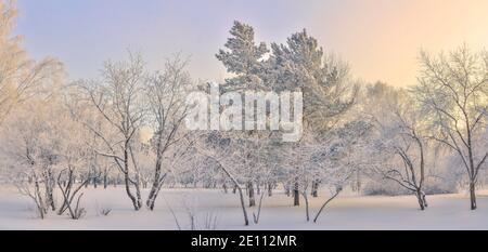 Matin d'hiver glacial dans le parc de la ville avec neige et givre couverts. Rime blanche sur les branches des arbres et des buissons, sur les aiguilles vertes du pin. Beauté urbaine