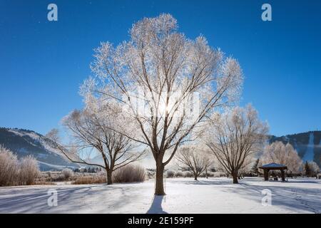 Le givre se hpare aux arbres un matin d'hiver à Jackson Hole, Wyoming, États-Unis.