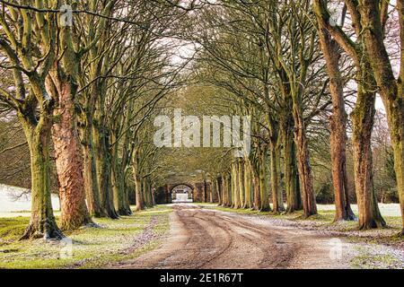 Avenue des arbres en hiver près de Durham, comté de Durham, Angleterre, Royaume-Uni.