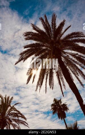 En regardant jusqu'aux palmiers sur fond bleu ciel, vent dans les feuilles, légèrement nuageux, style vintage, une journée ensoleillée
