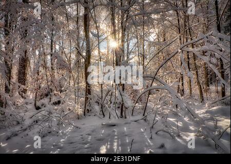 DE - BAVIÈRE: Scène d'hiver dans les bois de Pfannenholz près de Bad Toelz