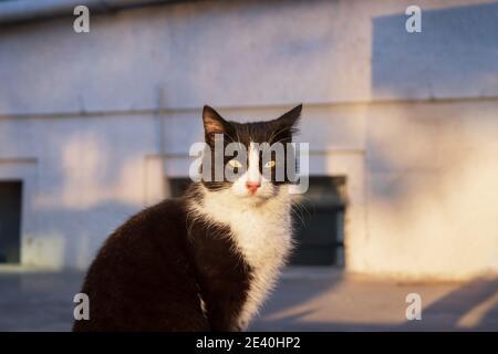 Chat noir mignon et doux dans la rue