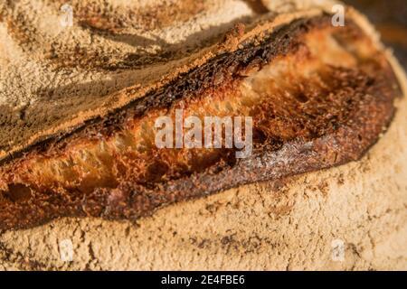 Un pain de levain brad