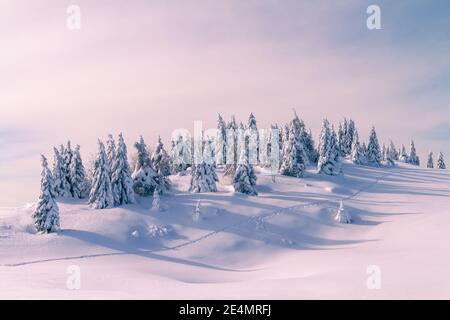 Paysage d'hiver avec des pins enneigés dans les montagnes. Ciel bleu clair avec lumière du soleil.