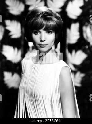 1962 , USA : l'actrice italienne ELSA MARTINELLI ( 1935 - 2017 ) dans les productions hollywoodiennes , pubblicity encore pour le film HATARI ! - portrait - ritrato - CINÉMA - FILM --- Archivio GBB