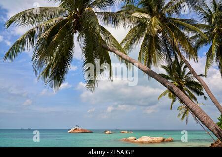 Île tropicale avec vue sur le golfe de Thaïlande à travers les cocotiers.
