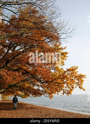 A man walks under a tree on the shore of Lake Leman on a sunny autumn afternoon in St-Sulpice near Lausanne November 7, 2008. REUTERS/Denis Balibouse    (SWITZERLAND)