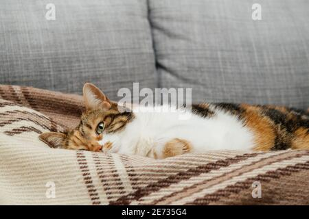 Vue de face d'un joli chat avec un œil ouvert Se préparer à dormir dans ses rêves sur un classique britannique courtepointe à motifs