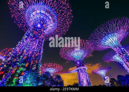 Singapour - 29 avril 2018 : Supertree Grove à Gardens by the Bay pendant le spectacle de lumière avec lumière pourpre, indigo et rouge dans le centre de Singapour, Marina
