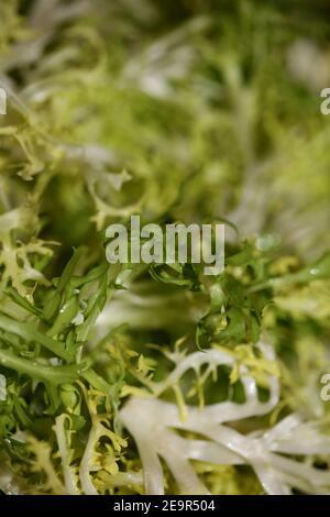 Légumes verts gros plan Cichorium endivia famille asteraceae moderne haut des impressions de qualité
