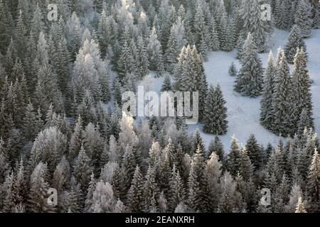 Arbres couverts de givre et de neige dans les montagnes d'hiver - Arrière-plan de Noël