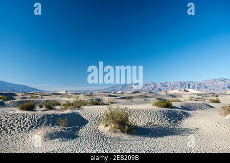 Les dunes de sable de Mesquite Flats, à l'extrémité nord du parc national de la vallée de la mort, en Californie.