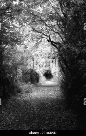 En automne, un chemin boisé passe de l'obscurité à la lumière et de retour à l'obscurité Banque D'Images