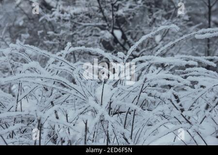 Paysage d'hiver, arbres dépolis et buissons dans un parc de la ville, en hiver