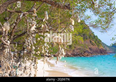 Arbre de souhaits. Coraux suspendus à un arbre, attachés par des cordes, sur une côte tropicale en Thaïlande.
