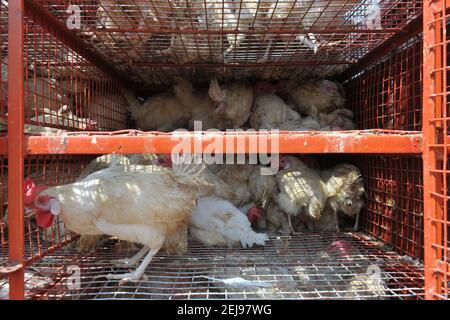 Jagdalpur- marché de l'abus d'animaux à Chhattisgarh-Inde
