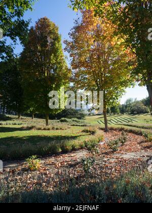Arbres dans le champ de lavande, Wanaka, Queenstown-Lakes District, Otago, South Island, Nouvelle-Zélande