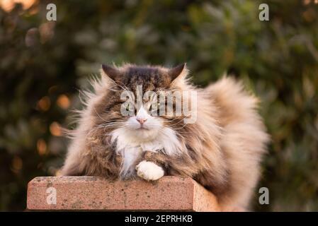 joli chat doux avec des whiskers très longs et des sourcils à l'appareil photo