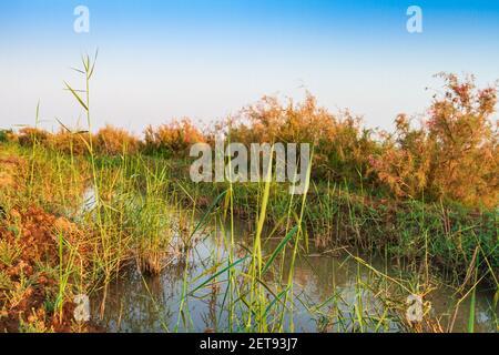 Un champ humide avec de l'eau qui coule à travers un canal d'irrigation sur une terre agricole cultivée