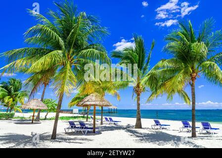 Paysage tropical avec noix de coco sur la plage des caraïbes, Cancun, péninsule du Yucatan au Mexique.