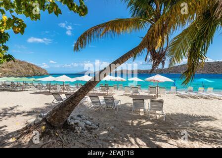 Des chaises longues de groupe pour vous détendre et bronzer sous des parasols et des palmiers sur une plage de sable de la mer des caraïbes. Concept de vacances d'été. Banque D'Images