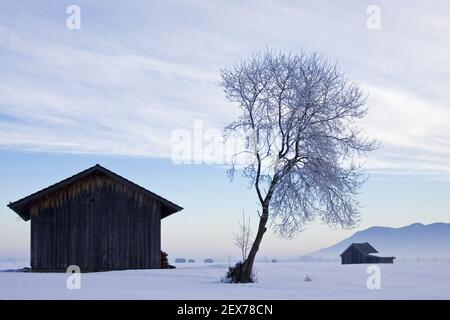 Lever de soleil givré et brumeux sur le plateau alpin, Kochelsee, Bavière forte gelée dans les arbres, lever de soleil givré et brumeux dans la ba