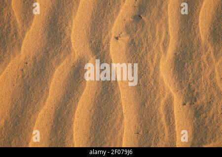 Vague de sable dans la lumière du coucher du soleil créée par le vent sur la dune errante Rubjerg Knude près de Lønstrup, Danemark