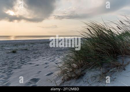 Dunes de sable de la plage de Blavand au Danemark avec de l'herbe sèche