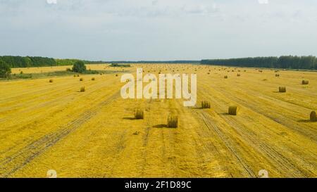 Vue de dessus du champ agricole doré avec des balles de foin. Balles de blé après récolte sur le terrain. Champ agricole composé de grosses balles rondes jaunes après la récolte, de rouleaux de paille, de balles de paille dans le champ agricole.