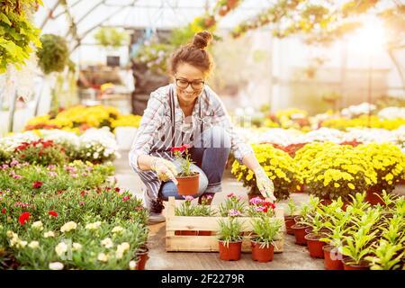 Joyeuse belle fleuriste motivée femme qui croque et sélectionne des fleurs dans la boîte en bois sur le plancher de la serre.