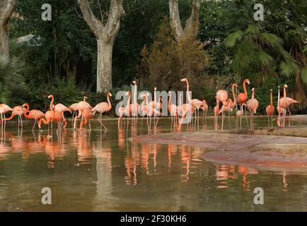 Magnifiques flamants roses dans la nature. Zoo de Barcelone