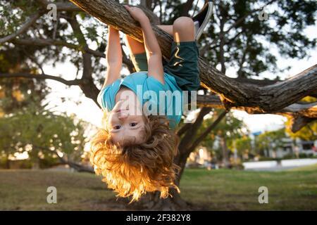 Petit enfant sur une branche d'arbre. Escalade et pendaison de l'enfant. Portrait d'un bel enfant dans le parc au milieu des arbres. Sport extrême pour les enfants. L'enfant monte un arbre.