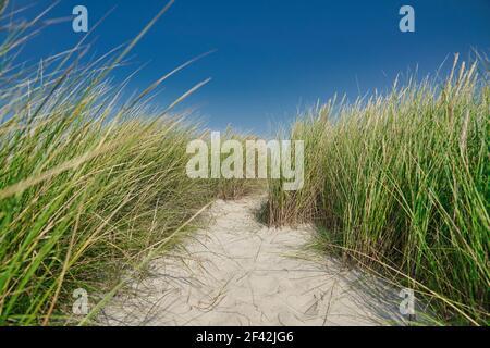 Dune avec herbe de marram et ciel bleu en arrière-plan à Blavand, Jutland, Danemark